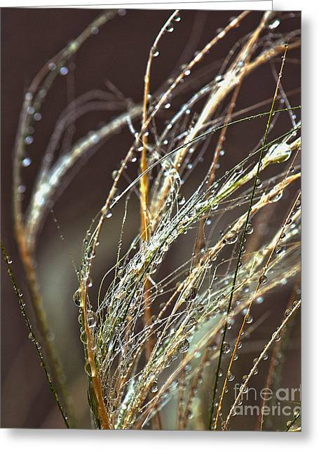 Beads Of Water Greeting Cards - Beads of Water on Sea Grass Greeting Card by Artist and Photographer Laura Wrede