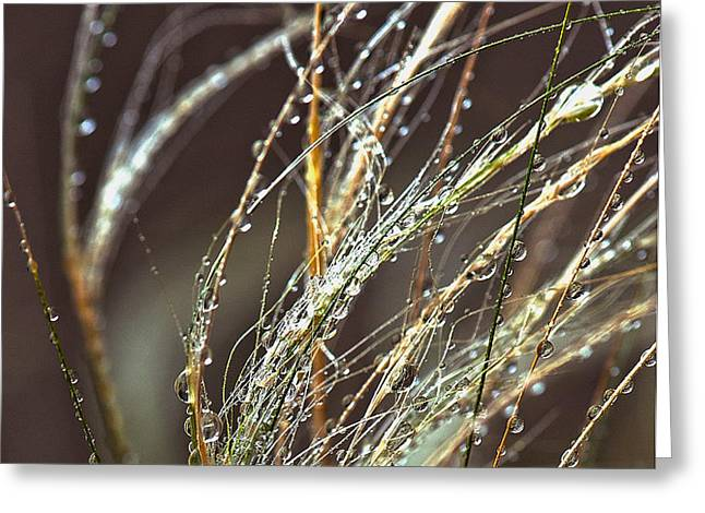 Beads of Water on Sea Grass Greeting Card by Artist and Photographer Laura Wrede