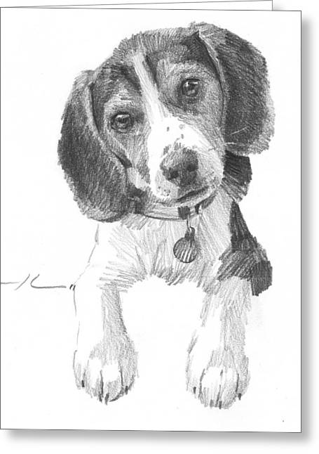 Puppies Drawings Greeting Cards - Beagle Puppy Pencil Portrait Greeting Card by Mike Theuer