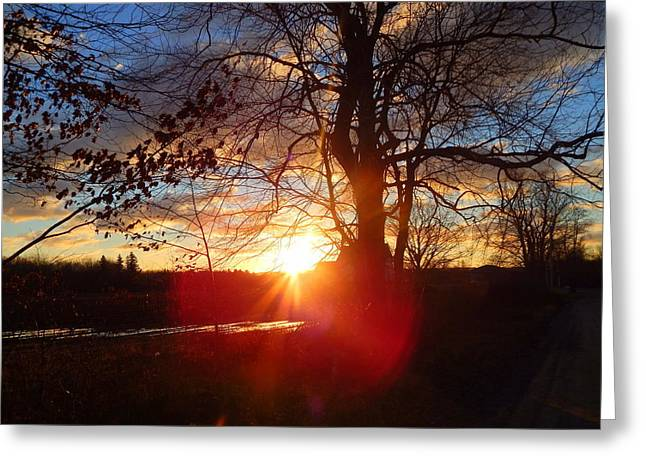 Annapolis Valley Greeting Cards - Beaming With Happiness Greeting Card by Karen Cook