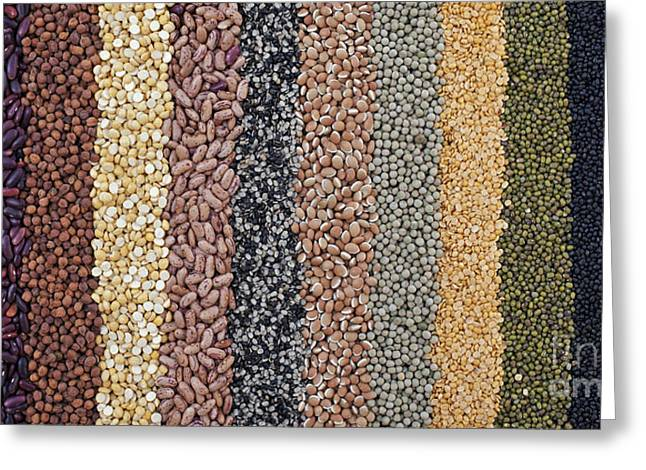 Gram Greeting Cards - Beans and Pulses Pattern Greeting Card by Tim Gainey