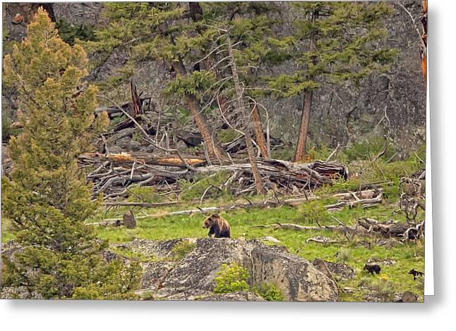 Natural Focal Point Photography Greeting Cards - Bear Country Greeting Card by Natural Focal Point Photography