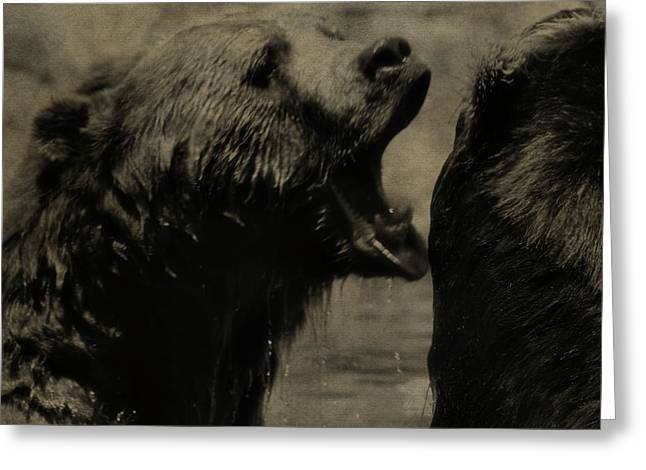 Kodiak Greeting Cards - Bear Fight Greeting Card by Dan Sproul
