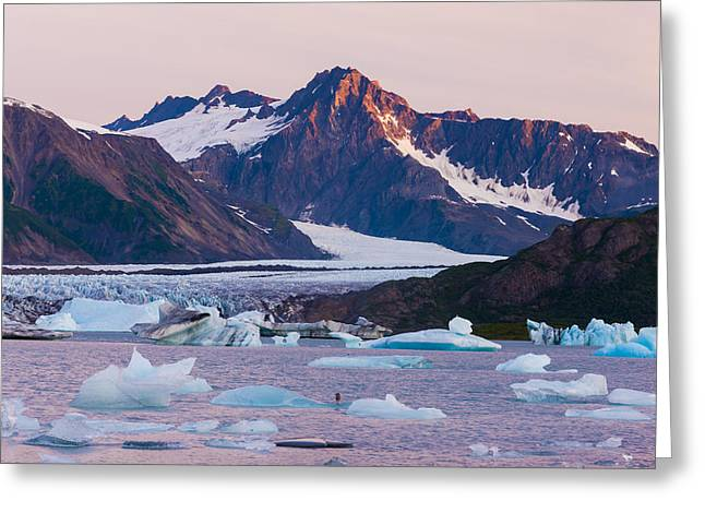 Bear Glacier Lake With Icebergs At Greeting Card by Michael DeYoung