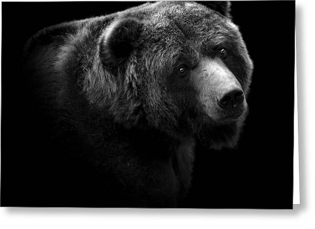 Portrait Photography Greeting Cards - Portrait of Bear in black and white Greeting Card by Lukas Holas