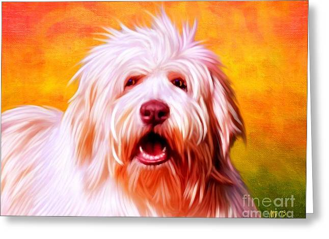 Collie Pics Greeting Cards - Bearded Collie Greeting Card by Iain McDonald