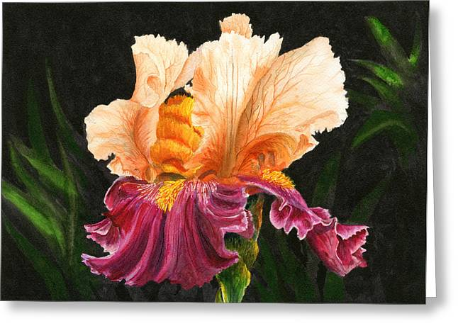 Bearded Iris Greeting Cards - Bearded Iris Greeting Card by Karen Wright