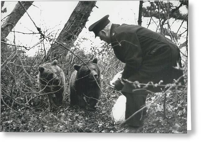 Retro Photography Greeting Cards - Bears Still At Large On The Isle Of Wight Greeting Card by Retro Images Archive