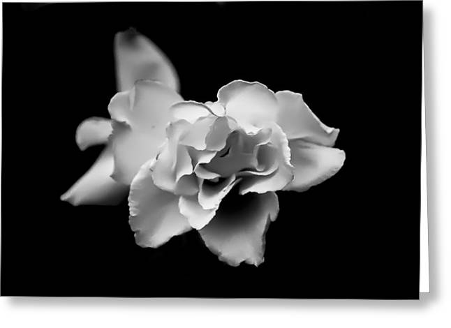 Digitalphotograph Greeting Cards - Bloom 2 Greeting Card by Michael Kelly-DeWitt