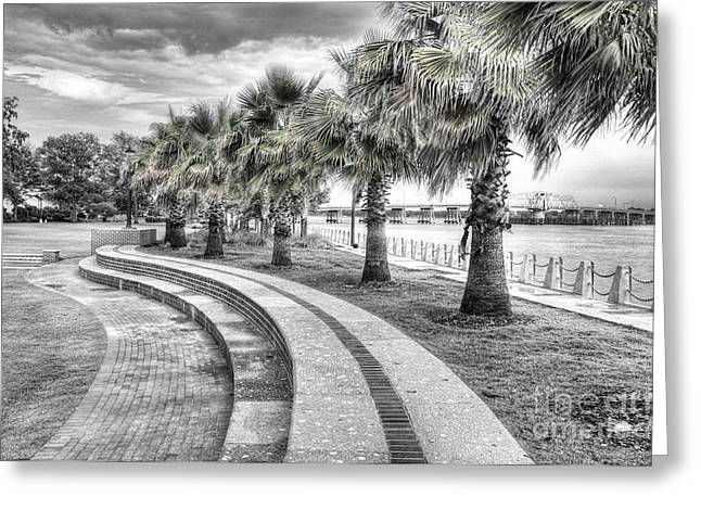 Palmetto Trees Greeting Cards - Beaufort SC Water Front Park Greeting Card by Scott Hansen