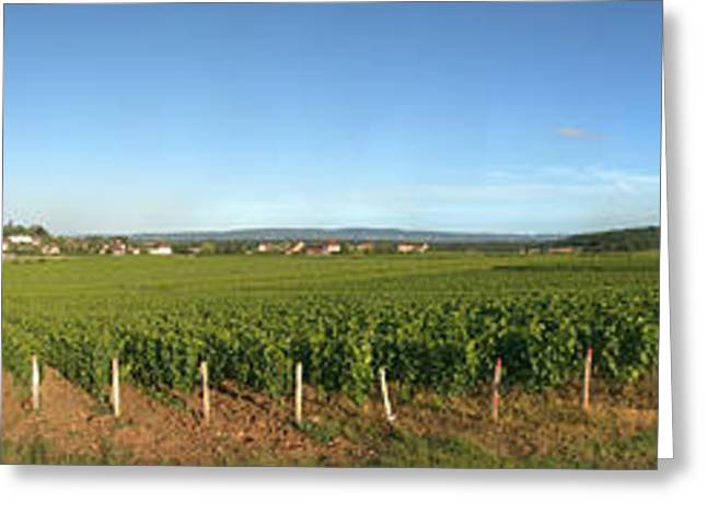 Vineyard Landscape Greeting Cards - Beaujolais Vineyard, Jully-les-buxy Greeting Card by Panoramic Images