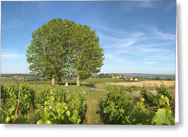 Vineyard Scene Greeting Cards - Beaujolais Vineyard, Montagny Greeting Card by Panoramic Images