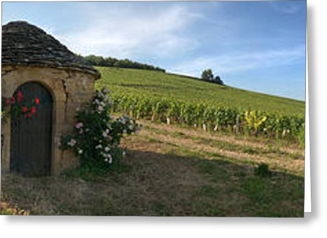 Vineyard Scene Greeting Cards - Beaujolais Vineyard, Saules Greeting Card by Panoramic Images