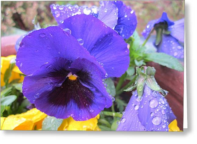 Springflowers Greeting Cards - Beauties in the rain Greeting Card by Rosita Larsson