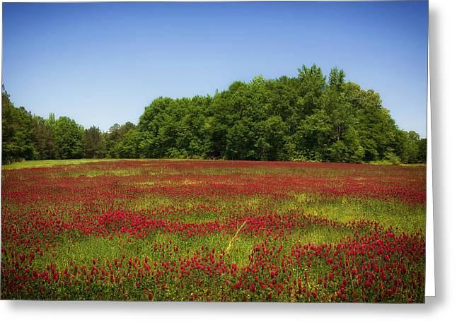 Alabama Greeting Cards - Beautiful Alabama Greeting Card by Mountain Dreams