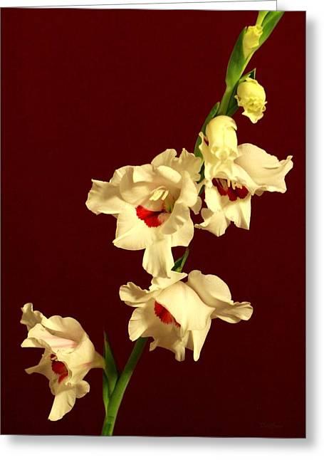 Gladiolas Greeting Cards - Beautiful Array Greeting Card by Deborah  Crew-Johnson