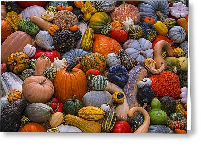 Gourds Greeting Cards - Beautiful Autumn Harvest Greeting Card by Garry Gay