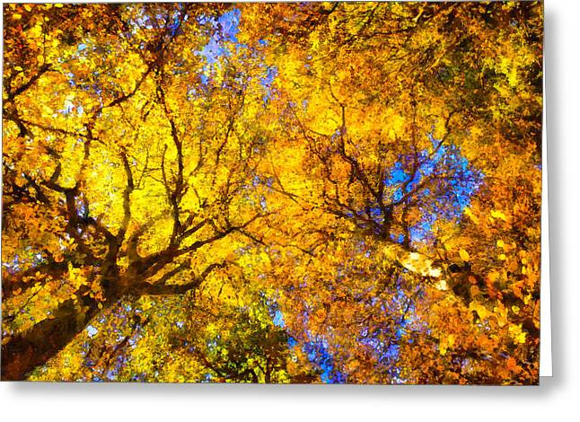 Reds Of Autumn Digital Greeting Cards - Beautiful autumnal trees yellow orange digital painting Greeting Card by Matthias Hauser