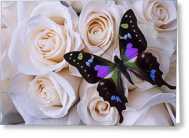 Red Petals Greeting Cards - Beautiful black winged butterfly Greeting Card by Garry Gay