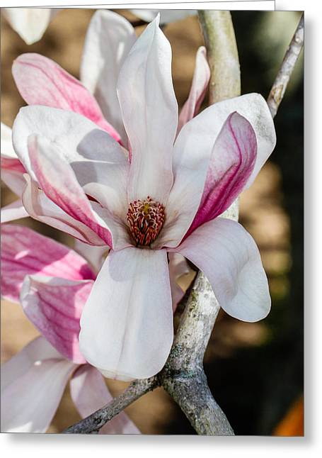 Cheekwood Greeting Cards - Beautiful Blooms Greeting Card by Robert Hebert