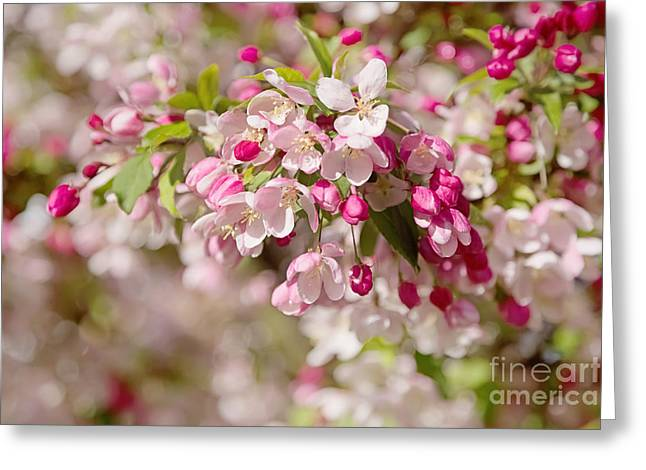 Pink Flower Prints Greeting Cards - Beautiful Blossom Greeting Card by Natalie Kinnear
