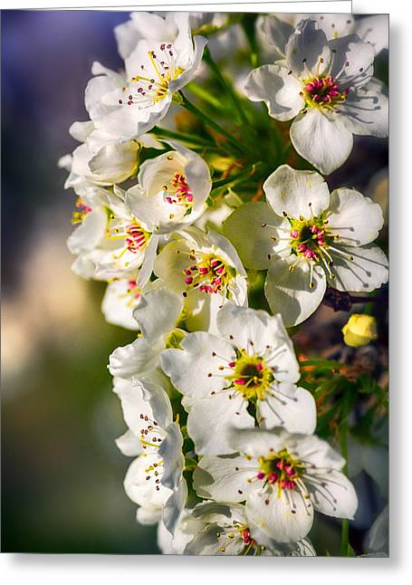 Close Focus Nature Scene Greeting Cards - Beautiful Blossoms Greeting Card by Sennie Pierson