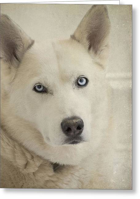 Sasha Greeting Cards - Beautiful Blue Eyes Greeting Card by Cindy Rubin