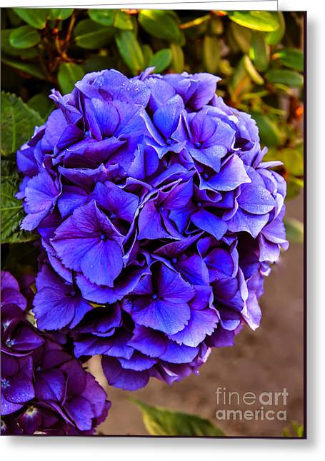 Haybale Greeting Cards - Beautiful Blue Hydrangea Greeting Card by Robert Bales