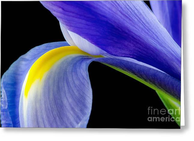 Macro Photography Pyrography Greeting Cards - Beautiful Blue Iris Macro Greeting Card by Yasar Ugurlu