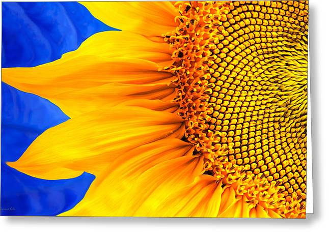 Yellow Sunflower Digital Greeting Cards - Beautiful Bold Sunflower Greeting Card by Christina Rollo