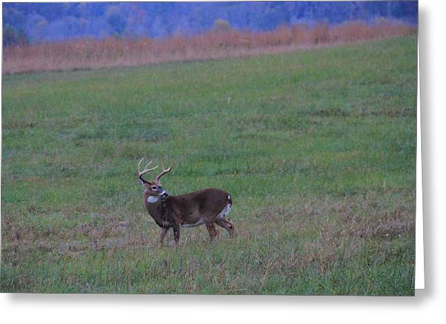Gatlinburg Tennessee Greeting Cards - Beautiful Buck In The Smoky Mountains Greeting Card by Dan Sproul