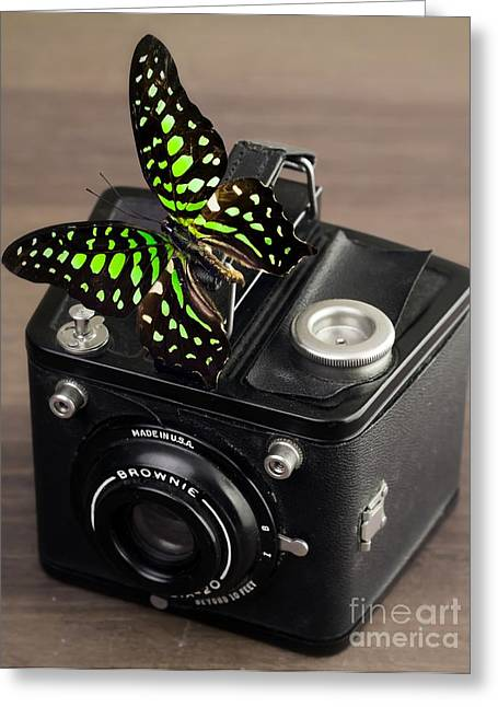 New Hampshire Greeting Cards - Beautiful Butterfly on a Kodak Brownie Camera Greeting Card by Edward Fielding
