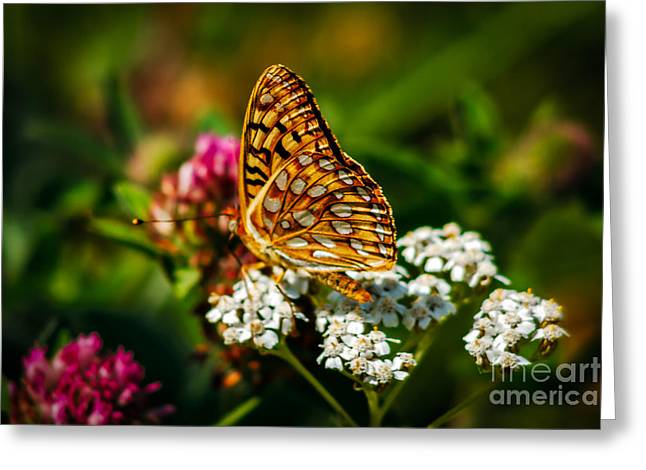 Haybales Greeting Cards - Beautiful Butterfly Greeting Card by Robert Bales