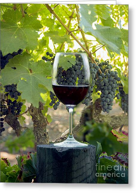 Napa Valley Greeting Cards - Beautiful Cabernet Greeting Card by Jon Neidert
