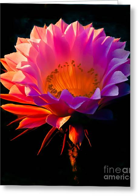 Bloomer Greeting Cards - Beautiful Cactus Greeting Card by Robert Bales