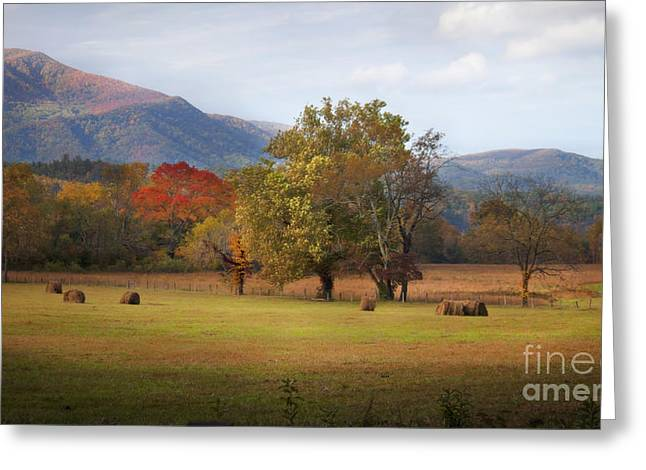 Beautiful Cades Cove Greeting Card by Lena Auxier