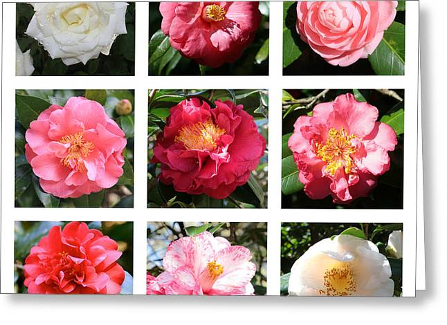 Beautiful Camellias Collage Greeting Card by Carol Groenen