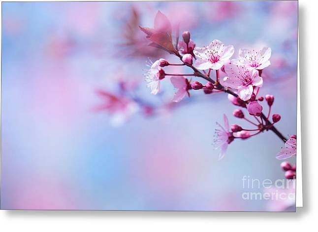 Apple Art Greeting Cards - Beautiful cherry blossom Greeting Card by Anna Omelchenko