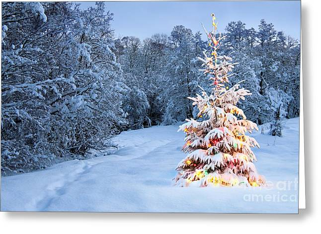 Flower Photos Pyrography Greeting Cards - Beautiful christmas tree in snow Greeting Card by Boon Mee