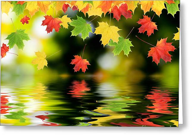 Johann Baptist Hofner Photographs Greeting Cards - Beautiful Colorful Leaves Greeting Card by Boon Mee