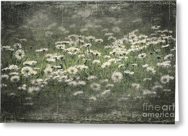 Fresh Green Greeting Cards - Beautiful Daisies Greeting Card by Svetlana Sewell