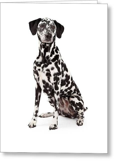 Obedience Greeting Cards - Beautiful Dalmatian Dog Sitting Greeting Card by Susan  Schmitz