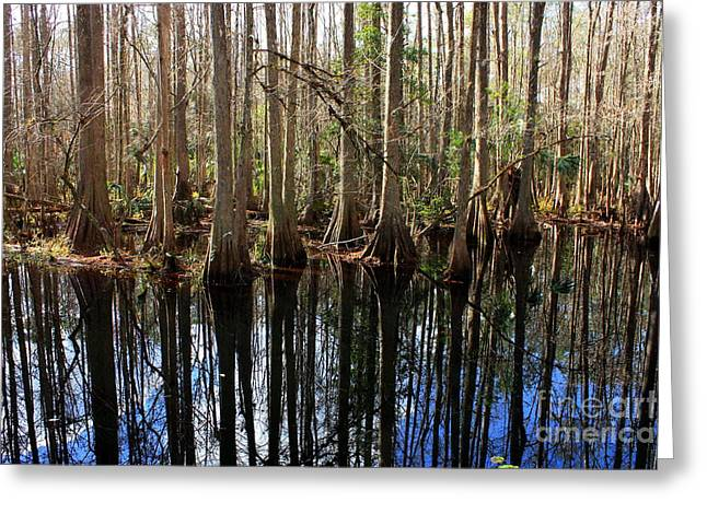 Florida Swamp Reflection Greeting Cards - Beautiful Day in the Cypress Swamp Greeting Card by Carol Groenen