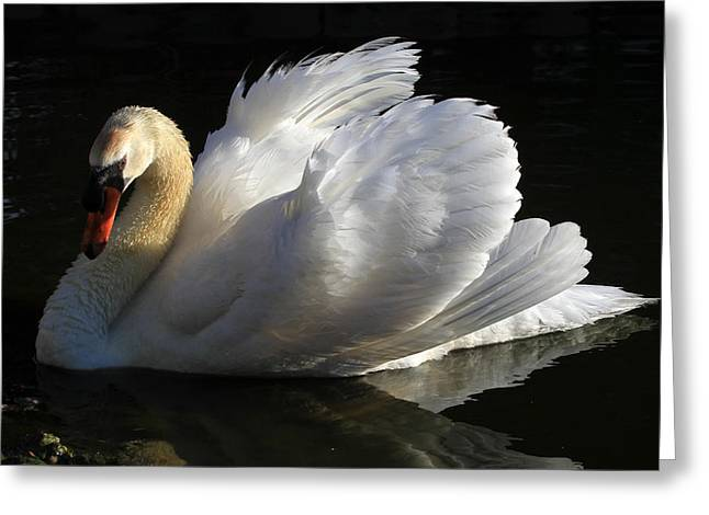 Canon 7d Greeting Cards - Beautiful Display Greeting Card by Donna Kennedy
