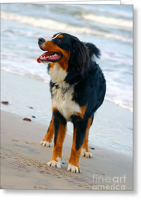 Dog Play Sea Greeting Cards - Beautiful dog portrait Greeting Card by Michal Bednarek