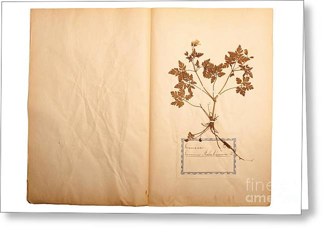 Beautiful Dried Vintage Flowers Greeting Card by Jochen Schoenfeld