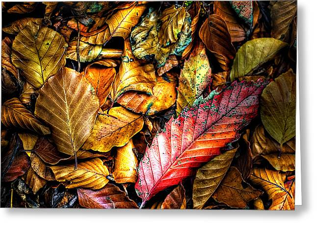Color Green Greeting Cards - Beautiful Fall Color Greeting Card by Meirion Matthias