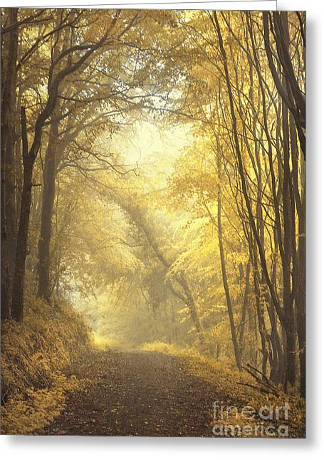 Alleys Greeting Cards - Beautiful Fall Greeting Card by Evelina Kremsdorf