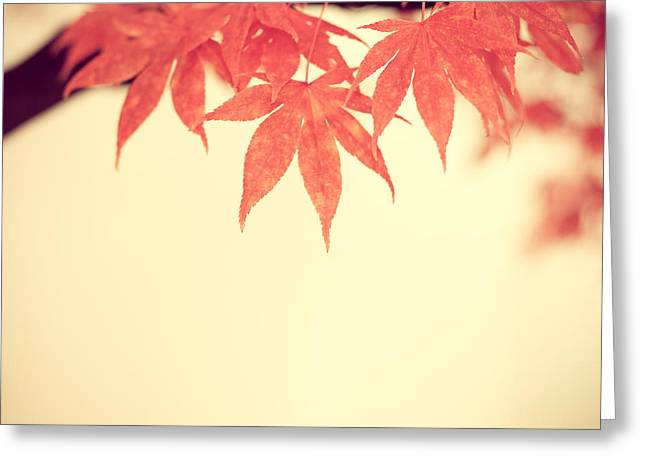 Beautiful Fall Greeting Card by Hannes Cmarits