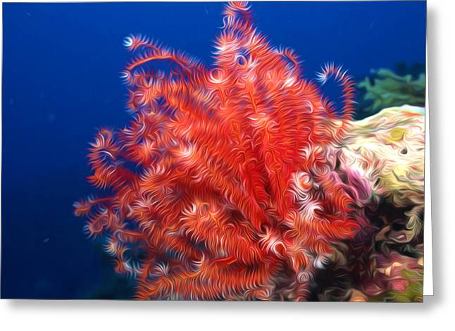 Sealive Paintings Greeting Cards - Beautiful fan coral Greeting Card by Lanjee Chee